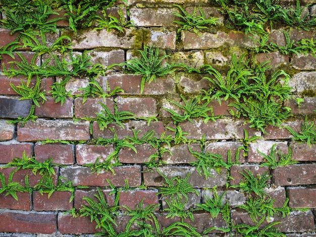 Een oude bakstenen muur begroeid met mos en varens