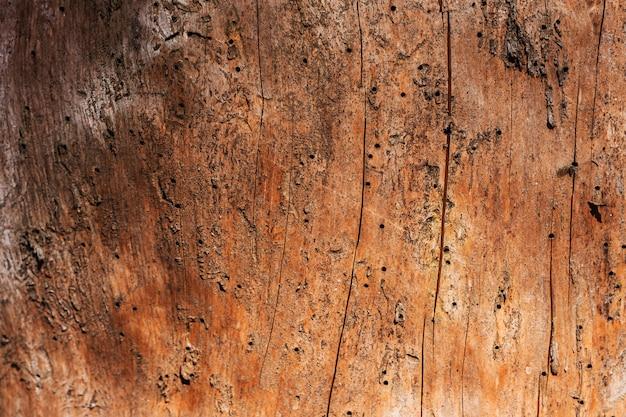 Een oude gedroogde boom, gegeten door een schorskever, zonder een bovenste laag schors