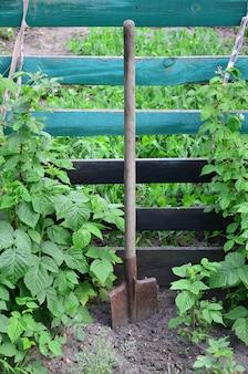 Een oude roestige schop dichtbij de frambozenstruiken, die naast de houten omheining van de dorpstuin groeien.