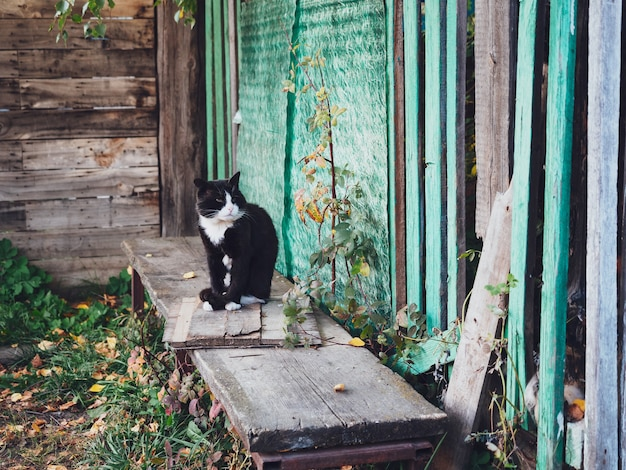 Een oude zwart-witte kat zit op een bankje in het dorp.