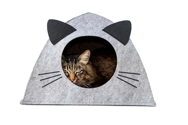 Een oudere gestreepte katkat in een vilten kattenhuis met oren en snorren