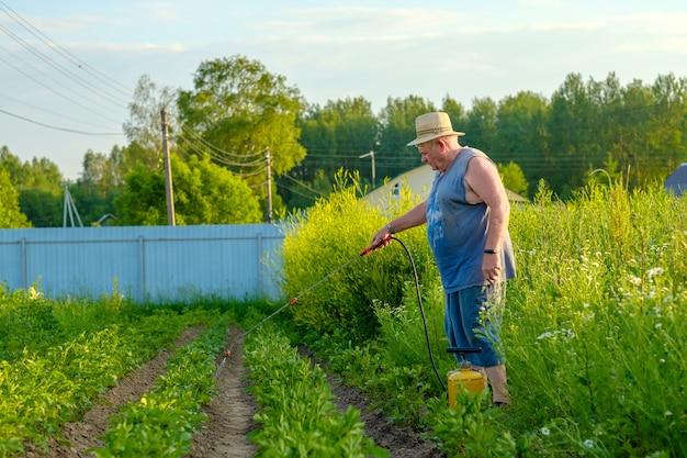 Een oudere man met een hoed spuit een insecticide op de toppen van aardappelen