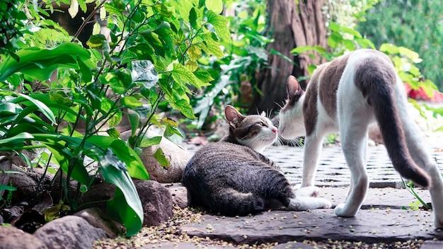 Een paar katten kussen in de tuin