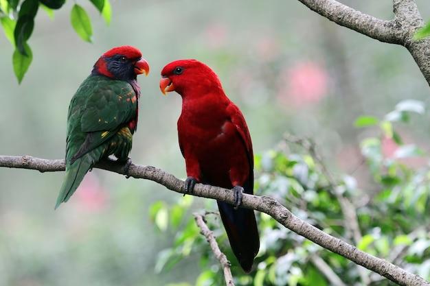 Een paar papegaaien op een takje ziet er romantisch uit
