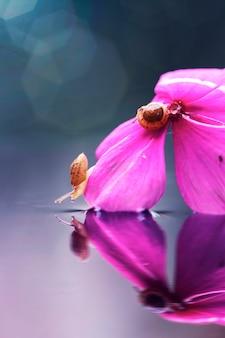 Een paar slakken op de paarse bloem en reflectie