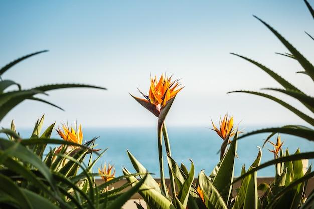 Een paar strelizia bloemen