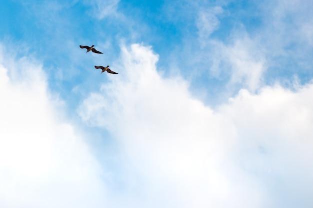 Een paar vogels vliegt in de blauwe lucht met wolken, een symbool van liefde en vrijheid