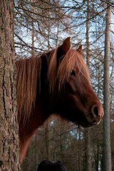 Een paard in een bos