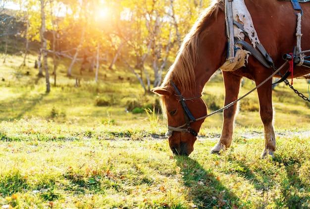 Een paard is aan het grazen