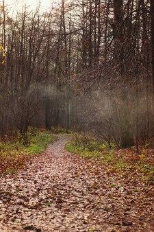Een pad bedekt met gevallen bladeren gaat in de verte het herfstbos in met mistige nevel.