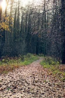 Een pad bedekt met gevallen bladeren gaat in de verte het herfstbos in.
