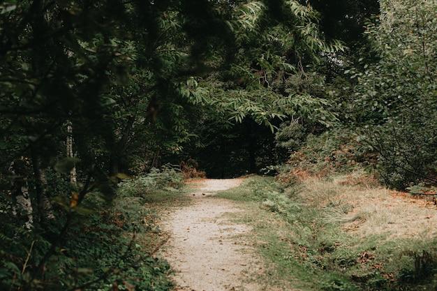 Een pad dat het bos binnenkomt met veel kleurrijke bomen en bladeren op de vloer en kopieerruimte