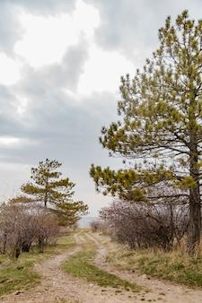 Een pad in de natuur met pijnbomen en donkere wolken erop lentebloesem in de natuur