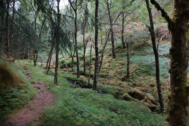 Een pad in een bos bedekt met mos