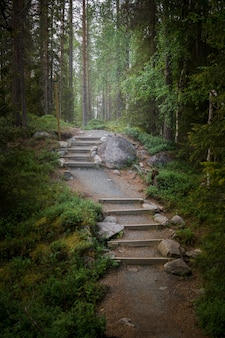 Een pad in een sprookjesbos in de schemering. mystiek licht en waas in de verte