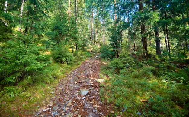 Een pad in het bos leidt een berg op tussen de bomen