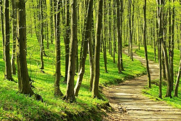 Een pad is in het groene bos