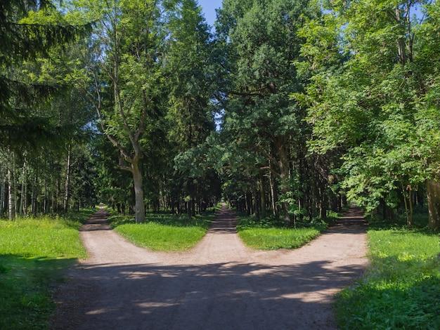Een pad kiezen. de kruising, drie boswegen komen samen in één.