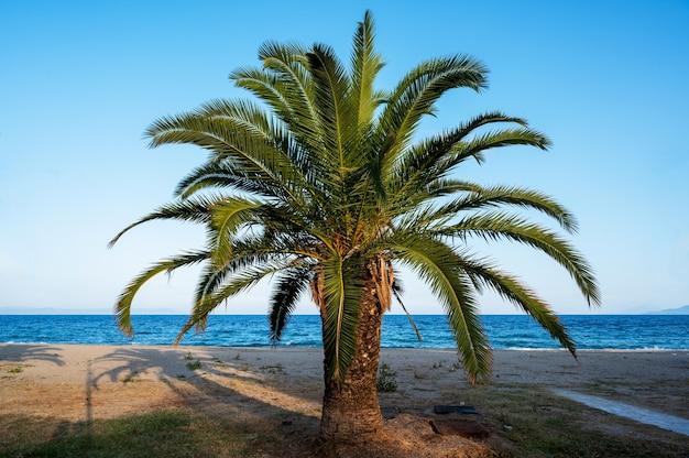 Een palmboom met strand en egeïsche zee, griekenland