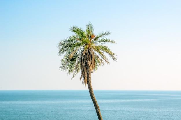 Een palmboom op de achtergrond van de blauwe lucht en de zee. goa india.