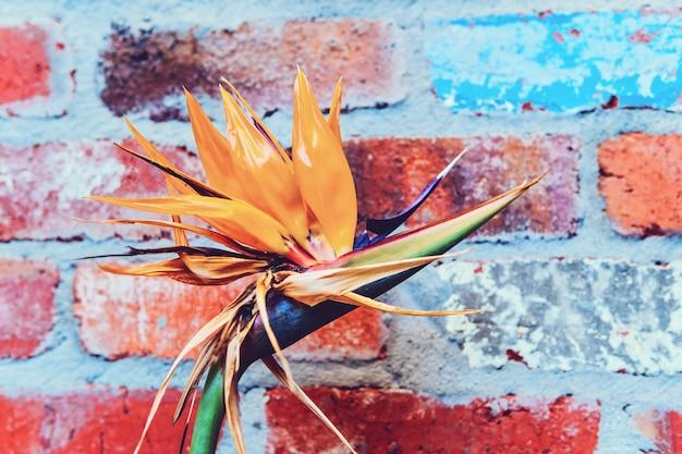 Een paradijsvogel bloem