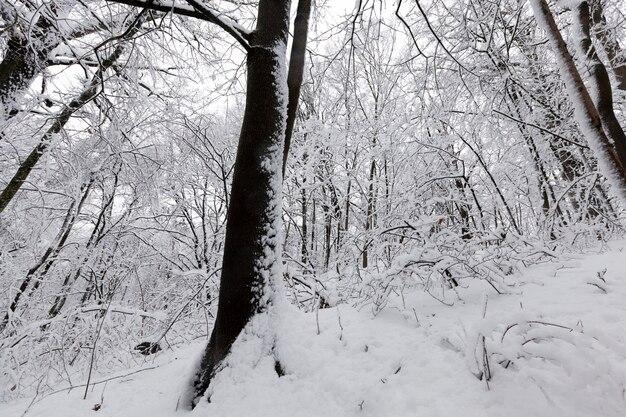 Een park met verschillende bomen in het winterseizoen, de bomen in het park zijn bedekt met sneeuw, er kunnen sporen van mensen in de sneeuw zijn