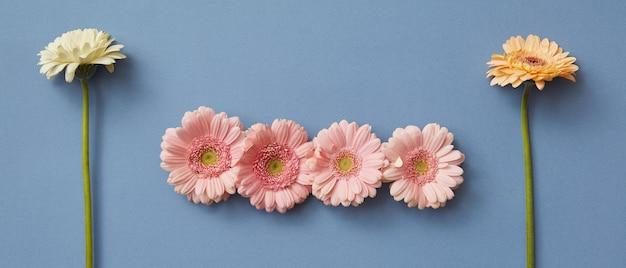 Een patroon van bloemen gerbera's op een blauwe achtergrond. de figuur uit het spel tetris. foto kan worden gebruikt als koptekst voor sites. plat leggen.