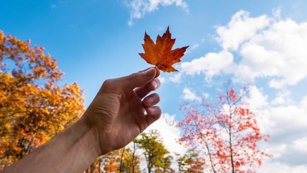 Een persoon die een oranje blad houdt onder een blauwe hemel met wolken