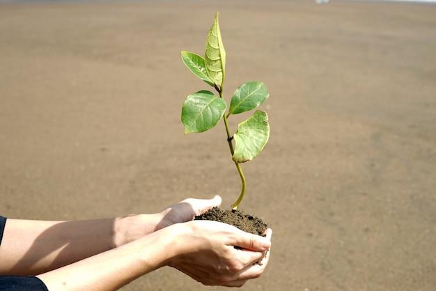Een persoon houdt een mangrove vast voordat hij gaat planten