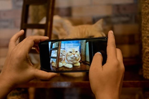 Een persoon neemt een foto van een kat met haar mobiele telefoon.
