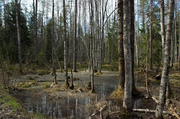 Een pittoresk moeras in het bos aan de rand van de weg.