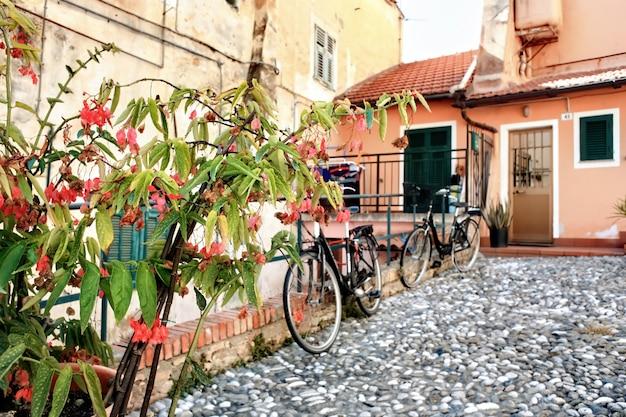 Een plant die opgroeit in sanremo, italië
