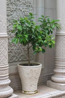 Een plant in een grote pot bij een stenen gebouw.