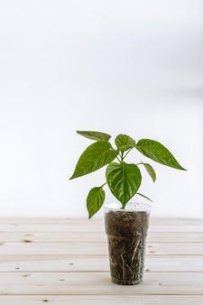 Een plastic beker met aarde waarin een jonge groene paprika voor zaailingen zit. het glas met de plant staat op een houten ondergrond