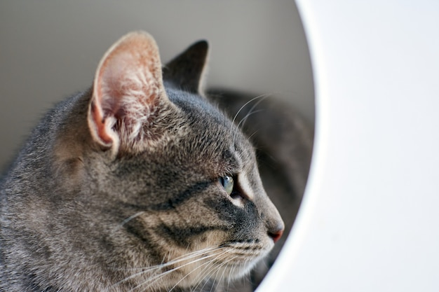 Een portret van een grijze kat met groene ogen die er goed uitziet