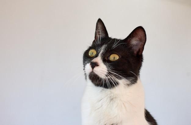Een portret van een zwart-witte kat