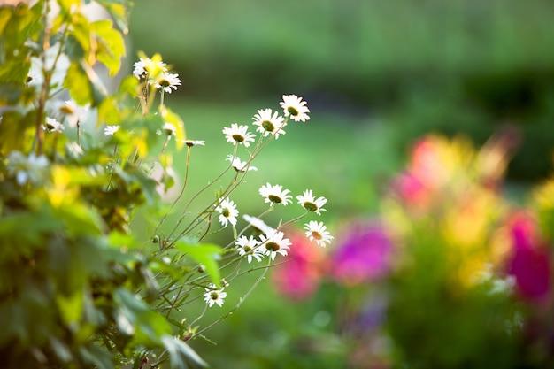 Een pot met bloemen in de tuin bij zonsondergang