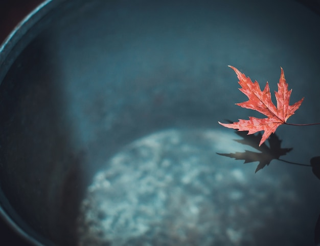 Een prachtig gesneden blad van rode esdoorn over een emmer water werpt een schaduw op het oppervlak.