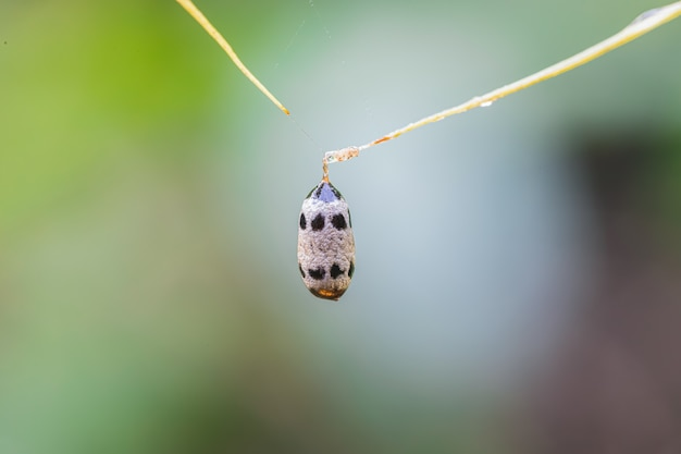 Een prachtig huis van insecten in de natuur