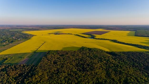 Een prachtig landschap van een geel veld en een groen bos