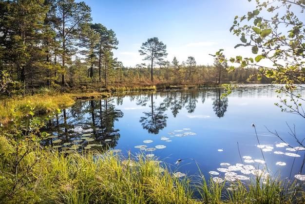 Een prachtig meer met spiegelreflecties van bomen op anzer island solovetsky islands