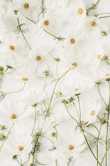 Een prachtig patroon met witte kamille, madeliefjesbloemen. bloemen textuur of print. vakantie, huwelijk, verjaardag, jubileumconcept