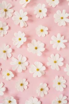 Een prachtig patroon met witte kamille, madeliefjesbloemen op bleekroze. bloemen textuur of print