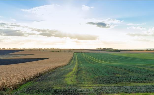 Een prachtig uitzicht over de velden - jonge groene tarwe en rijpe aartjes. avond landschap.