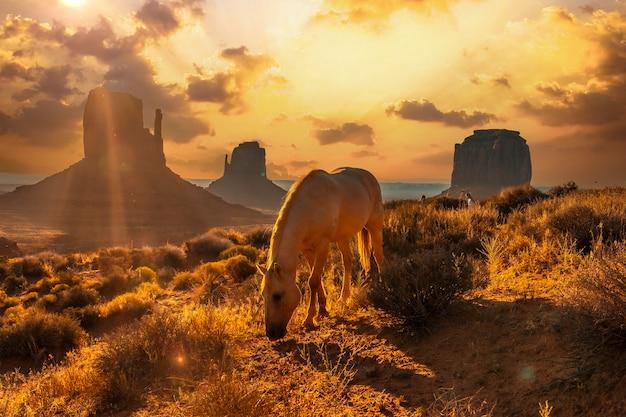 Een prachtig wit paard aan het eten in de dageraad van monument valley, utah