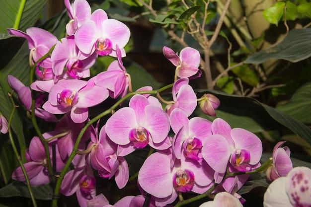 Een prachtige paarse bloem gekweekt in een tuin met vele andere bloemen pink orchid