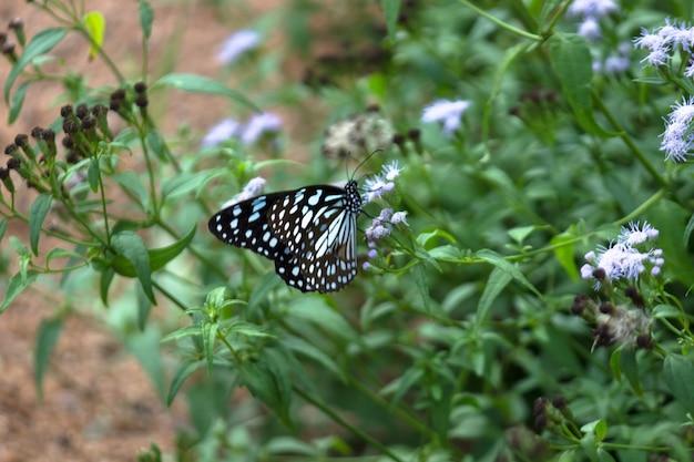 Een prachtige vlinder die tijdens het lenteseizoen op de bloemplanten rust