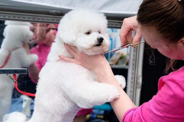Een professionele trimmer houdt de hond vast en gebruikt een schaar om de lijnen recht te trekken