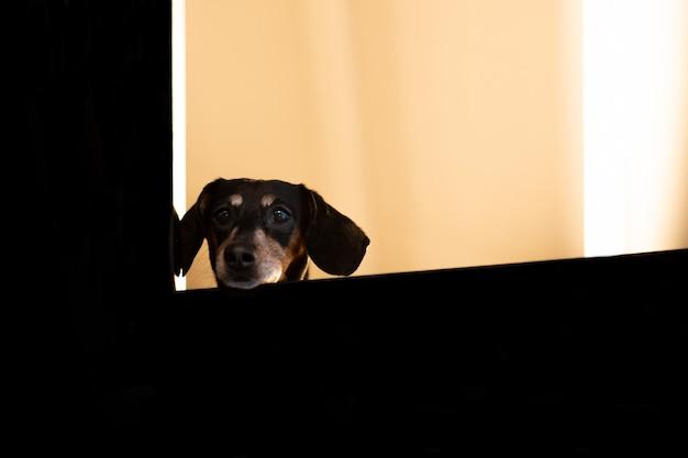 Een puppy kijkt uit het raam