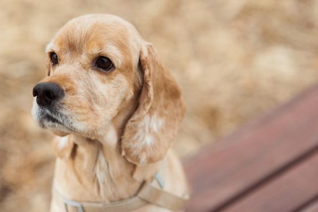 Een puppy zit op een bankje in een buitenpark en kijkt naar iets